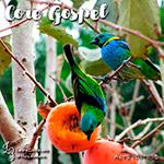 Core Gospel